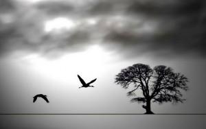 سوگ، تجربهی از دست دادن است، تجربهی طبیعی در گذر عمر و در ارتباط با خود و دیگران.